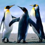 ペンギン&パンダアップデートとは?