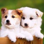 ペット飼う責任と殺処分